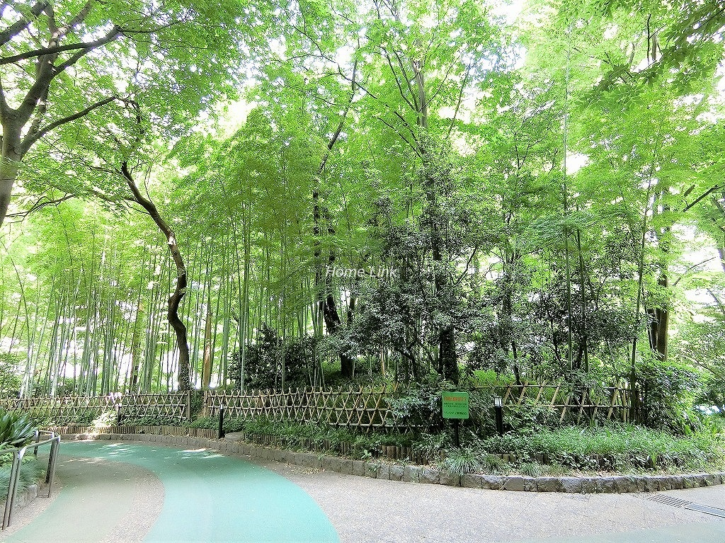 サンシティ 竹林