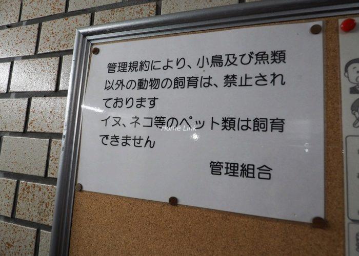 朝日板橋マンション 掲示物
